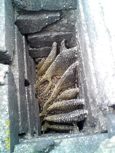 Bienenwaben im Schornstein